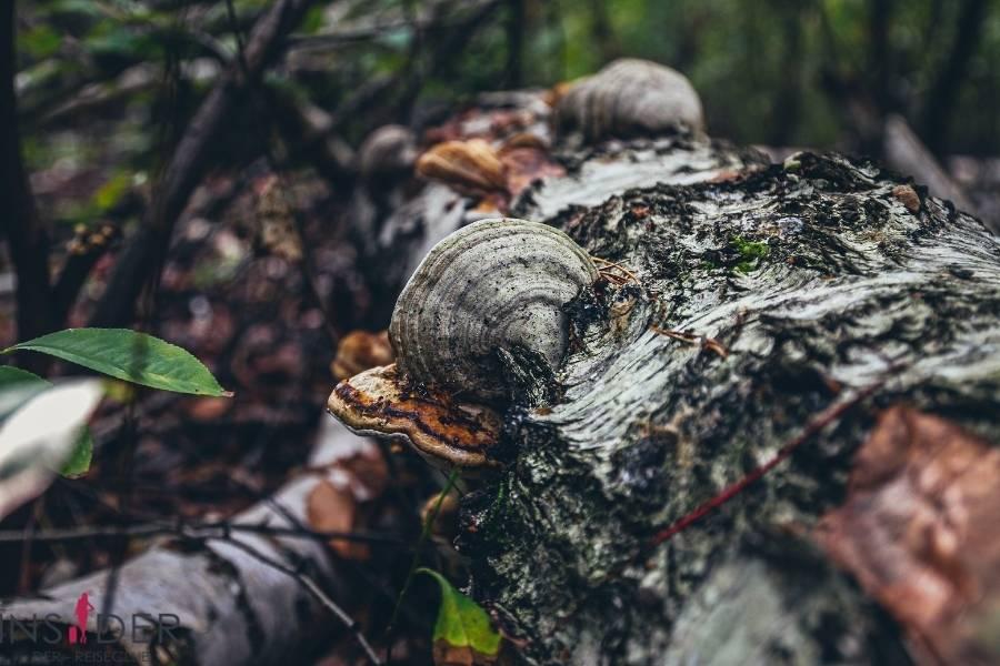 Der Lüßwald